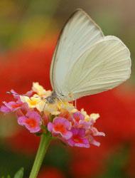 Libera mariposas en tu boda