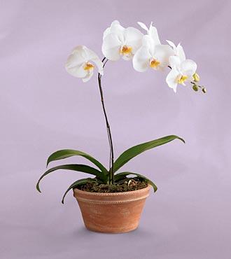 orquideas3.jpg