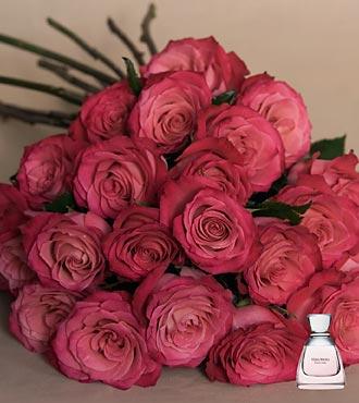 rosas_fuccias.jpg