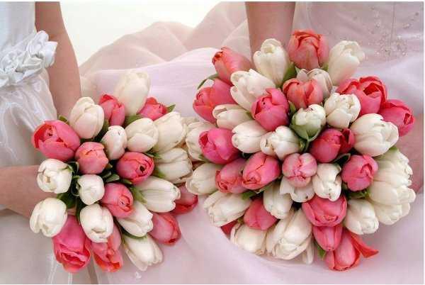 Tulipanes para ramos de flores